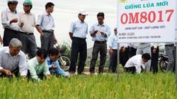 ThaiBinh Seed cung ứng 2.500 tấn giống cho ND miền Trung-Tây Nguyên