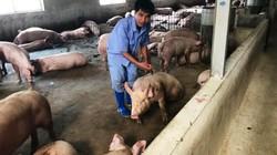 """Giá lợn (heo) hôm nay 27.10: Giá lợn cả nước giảm 1.000-5.000 đ/kg; muốn xuất khẩu thịt lợn cần """"hộ chiếu"""" gì?"""