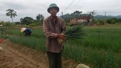 Kính nể nơi trồng có 60ha hành lá, thu về trên 21 tỷ đồng/năm