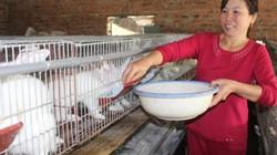 Được hỗ trợ sản xuất theo chuỗi, nông dân xứ Quan họ thu lợi cao