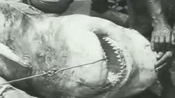 Video đầu tiên thế giới quay cảnh người săn cá mập dưới biển