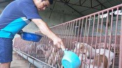 Giá lợn (heo) hôm nay 31.10: Giá đã cao hơn tuần trước khoảng 1.000 đồng/kg