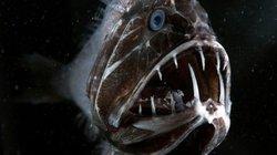 """Thả camera xuống đại dương, phát hiện hàng loạt """"thủy quái"""" kinh dị"""
