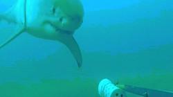Thả camera xuống biển sâu, không ngờ với hành động cá mập trắng