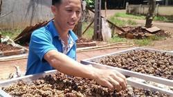 Khởi nghiệp từ nuôi chồn hương đến làm cà phê chồn, thu 500 triệu/năm