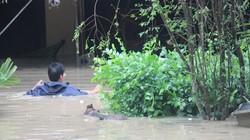 Clip: Nước lũ tấn công bất ngờ, dân Bình Định cuống cuồng chạy lũ