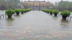 Hàng trăm con cá cảnh ở Hoàng Cung Huế... lên cầu bơi lội