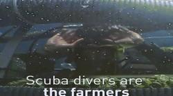 Thám hiểm nông trại trồng trái cây dưới đáy biển