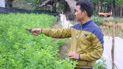 Làm giàu ở nông thôn: Bỏ lúa, làm ghép cây, 8X kiếm hàng trăm triệu