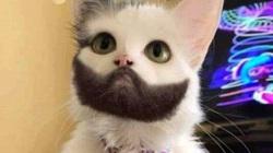 Tin vịt: Mèo biết nói ở Hải Phòng