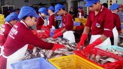 """TP.HCM nhận """"bao tiêu"""" hải sản Bình Thuận ở thị trường 10 triệu dân"""
