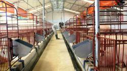 Áp dụng tiến bộ kỹ thuật, chăn nuôi vừa nhàn vừa lợi nhuận cao