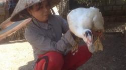 Làm giàu ở nông thôn: Cho ngan, gà chung 1 nhà, lãi hơn 200 triệu/năm