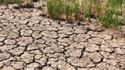 """""""Nên lồng ghép ứng phó biến đổi khí hậu vào chính sách giảm nghèo"""""""