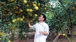 """Ngày Nhà giáo Việt Nam: """"Thầy giáo tỷ phú"""" có 8ha cam VietGAP"""
