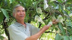 Nông dân làm giàu: Trồng mận quả xanh lét, ăn ngọt như đường, lãi 300 triệu/năm