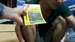 Tràn lan hạt giống, rau củ nhập từ Trung Quốc