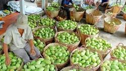 Xuất khẩu rau quả tăng khủng khiếp 20%/năm đến 2020 đạt 4,5 tỷ USD