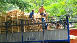 """Trung Quốc lại """"giở trò"""" ngừng thu mua dăm gỗ để ép giá?"""