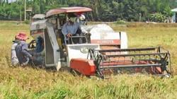 Sản lượng lúa tăng lên, nhưng thu nhập nông dân... giảm đi