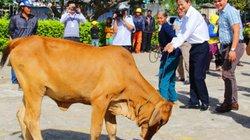EVN miền Trung góp lương tặng bò cho 15 hộ đặc biệt khó khăn