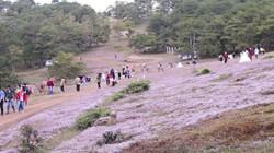 Du khách đổ về ngắm đồi cỏ hồng mộng mơ ở Đà Lạt