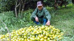 Làm giàu ở nông thôn: Lãi 700 triệu/năm từ quýt đặc sản Quang Thuận