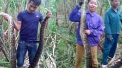 Không xử lý được vụ bắt, bán nấu cao 2 con trăn quý ở Nghệ An