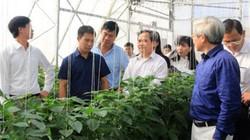 Hải Phòng: Diện mạo xã NTM thay đổi nhờ dự án trồng rau sạch VinEco