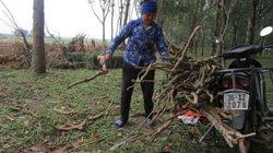 Thanh Hóa: Vì sao nông dân đòi chặt cây cao su, còn tỉnh muốn giữ?