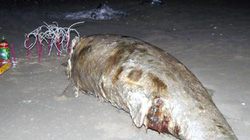 """Ngư dân làm lễ chôn cất xác cá """"thần"""" dạt vào bờ biển"""