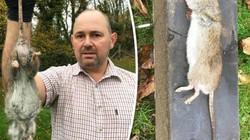 Bắt được chuột khổng lồ, lớn nhất nước Anh