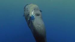 Cả ngàn cá voi, cá heo đang dần chết tức tưởi vì con người
