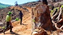 Có hay không việc cán bộ bao che cho tội phạm phá rừng ở Bình Định?