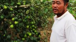 Làm giàu ở nông thôn: Biến vùng đất hoang thành nơi hút khách