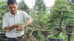 Bỏ nghề giáo viên về trồng cây cảnh, lãi 200 triệu đồng/năm