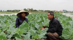 Tham gia mô hình trồng rau sạch, được mời sang Nhật tham quan