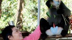 Dân hiến tặng một cá thể voọc chà vá chân đen để thả về rừng