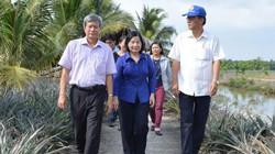"""20 Hội ND Đông - Tây Nam bộ thăm vườn dứa 10 tỷ của """"vua"""" khóm Cầu Đúc"""