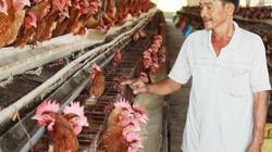 27 năm ròng rã nuôi gà đẻ, ông Tỷ giờ thành tỷ phú