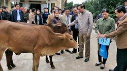 Bộ NNPTNT trao tặng bò giống cho hộ nghèo tại Tuyên Quang