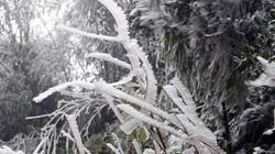 Băng tuyết rơi trên đỉnh Phan Xi Păng, trâu bò chết la liệt vì rét