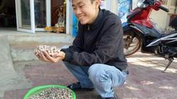 """Có một """"siêu đặc sản"""" tỏi cô đơn ở xứ Mường Sơn La!"""