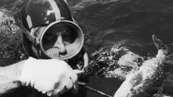 Bí ẩn 50 năm vụ Thủ tướng Úc đang bơi thì biến mất không dấu vết