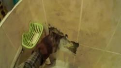 Nga: Thấy ánh mắt lóe lên trong tường, ngỡ ngàng khi đập ra