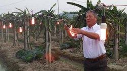 Hiệu quả bất ngờ khi dùng đèn compact trồng thanh long