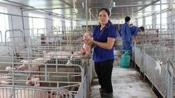 Giá heo hơi hôm nay 23/12: Giá vẫn tiếp tục tăng, lợn giống tăng thêm 50.000 đồng/con