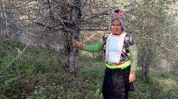 Làm giàu ở nông thôn: Ngoài trồng sơn tra, trong ta nuôi nhím