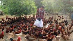 Làm giàu ở nông thôn: Nuôi gà leo cây, thu lãi hàng trăm triệu
