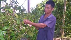 Trồng 600 cây trà hoa vàng, dân vùng cao Bắc Sơn thu 80 triệu/năm